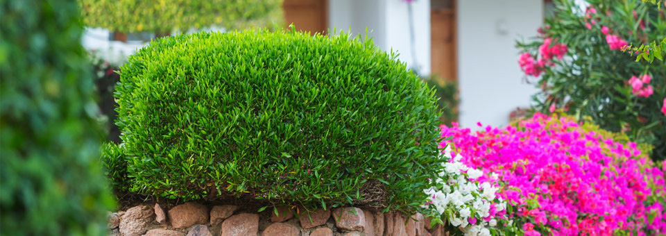 Gardenia Gartenbau Spring 2015