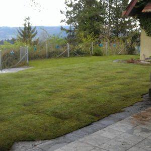 Rasen Garten B