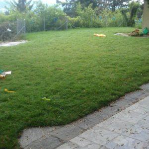 Rasen Garten C